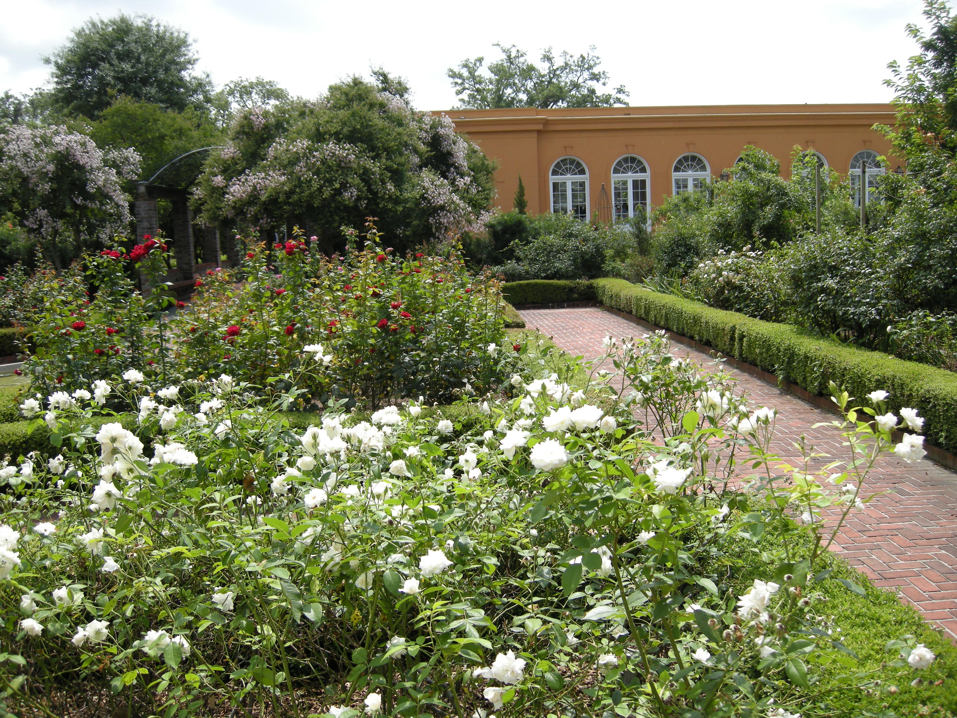 Gardening New Orleans Uptown Girl